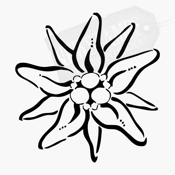 Florales Motiv Edelweiss