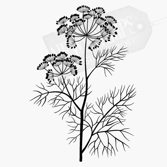 Florales Motiv Dillzweig