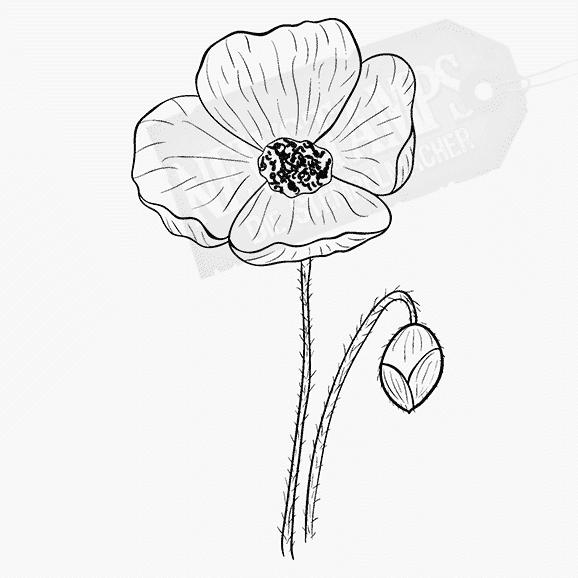 Florales Motiv Mohnblume mit Stiel und Knospe
