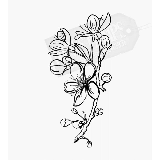 Florales Motiv Kirschblütenzweig