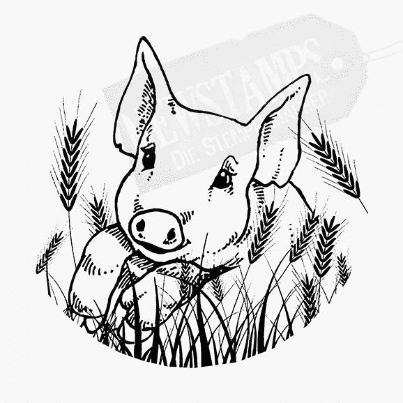 Tierstempel niedlicher Schweinekopf im Kornfeld