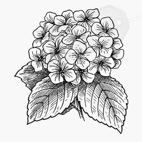 Florales Motiv Hyazinthe