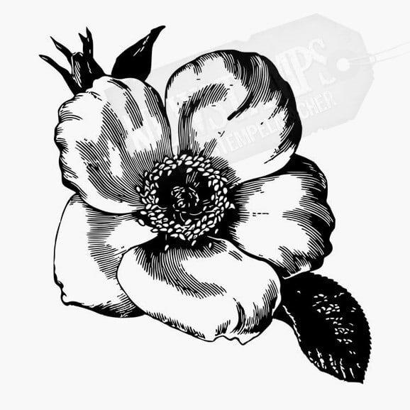 Florales Motiv Wildrose