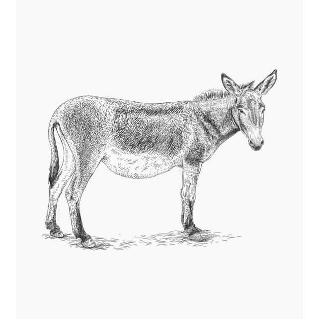 Esel schaut dich an Tierstempel