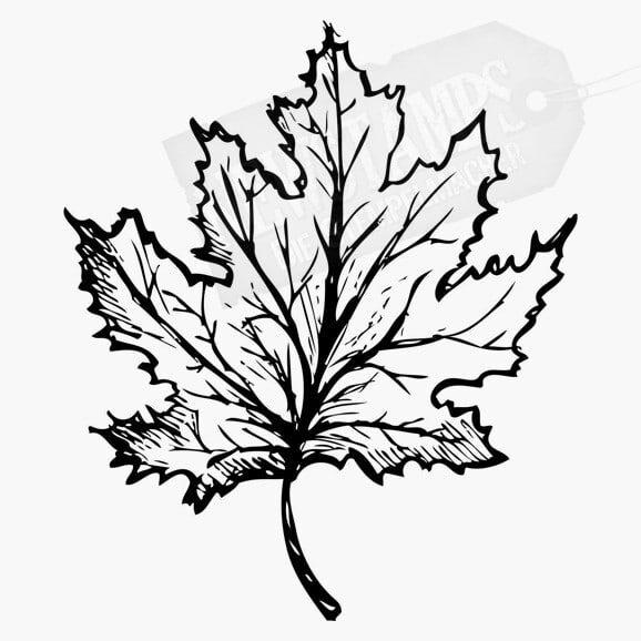 Floraler Stempel Ahornblatt