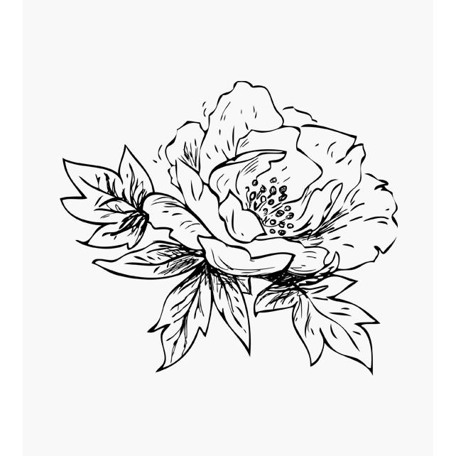 Floraler Stempel Pfingstrosen Blüte