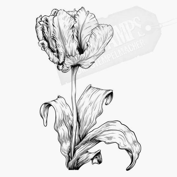 Blumenstempel Tulpe