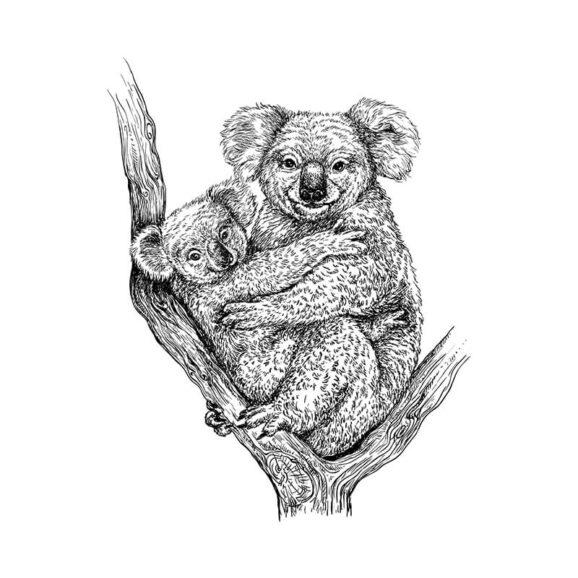 T085_Koalas